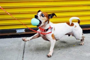 Watch Bushwick Artists Paint Pooch Portraits At This Sweet Animal Shelter Benefit at Better Than Jam