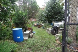 Community Gardens Are Reopening, and They Need Dedicated Volunteers